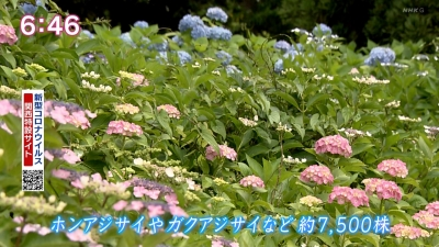 20210603-194006-136.jpg