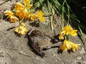 雀が死んでいた