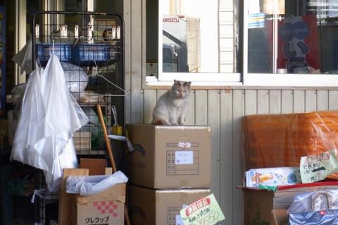 店番中の猫
