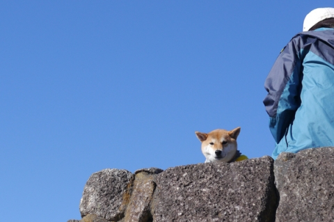 二宮吾妻山公園に来ていた柴犬