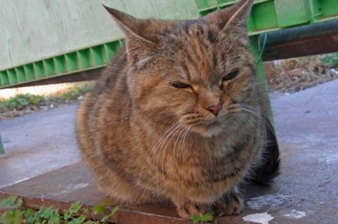 仲間を亡くして寂しそうな猫