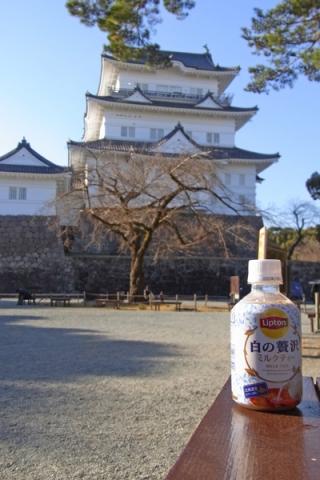 小田原城前で飲む紅茶