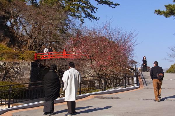 小田原城址公園常盤木橋の紅梅