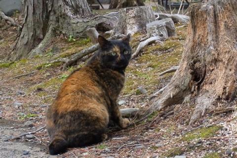小田原城の公園猫