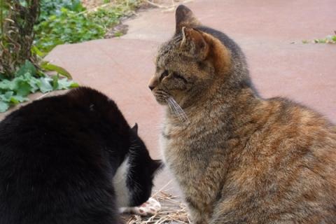 地域猫の横顔