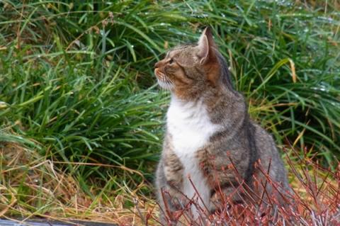 南足柄運動公園にいた猫