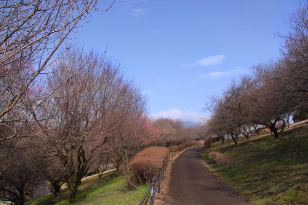 南足柄運動公園の散策路