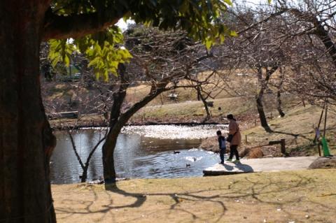 小田原フラワーガーデン冬のハナショウブ池
