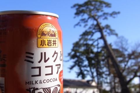 小田原城址公園の巨松とミルクココア