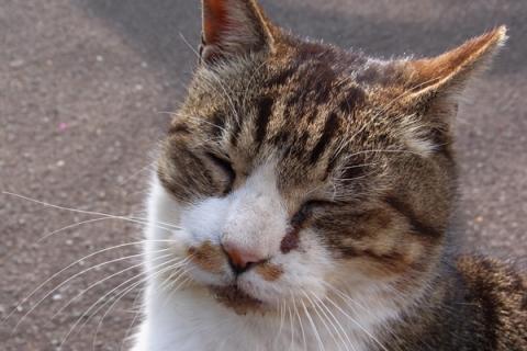 公園猫の顔