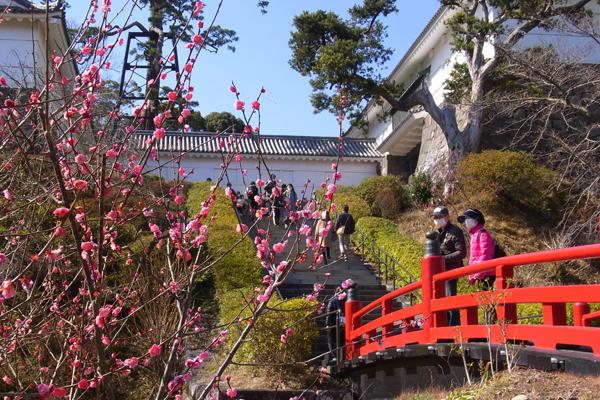 小田原城址公園の常盤木橋と紅梅
