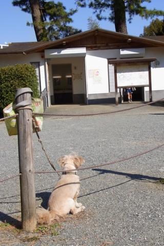 飼い主を待つ犬の後ろ姿