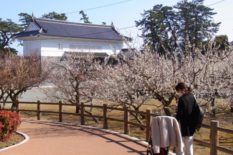 小田原城址公園銅門広場の白梅