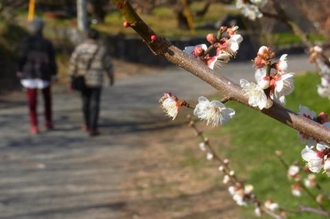 梅の里スナップ