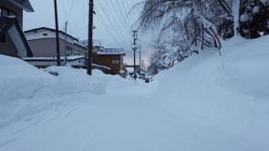 増田小学校裏二本杉付近