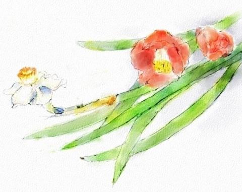 水仙と椿4_bak_bak