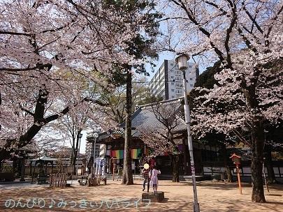 kawagoekumano20210301.jpg