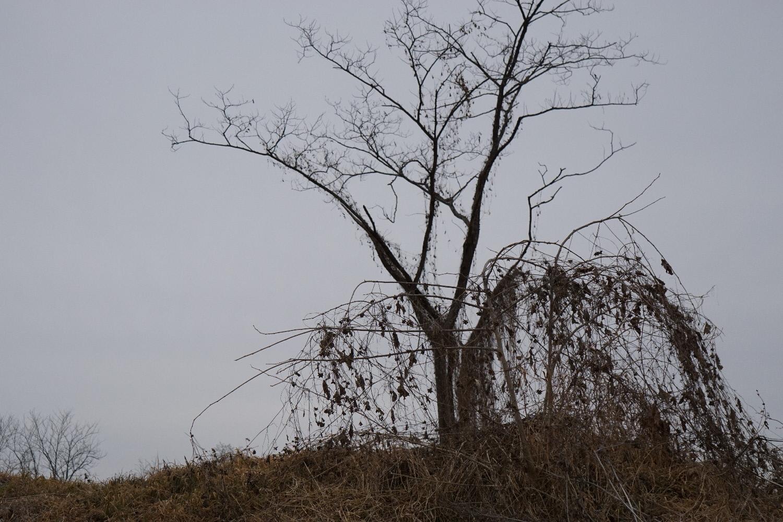 冬の木(1)
