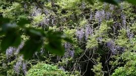 20200509現生の森052