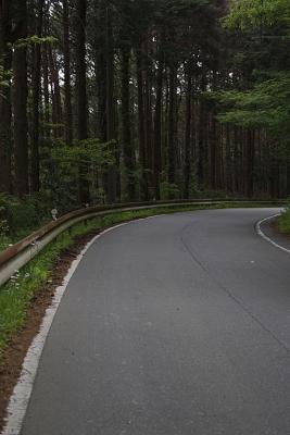 20200509現生の森053KP