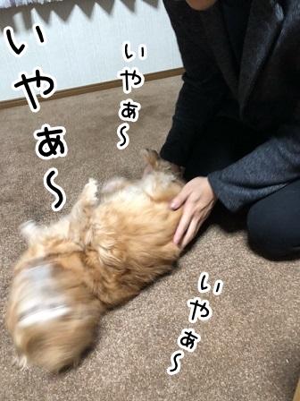 kinako20984.jpeg