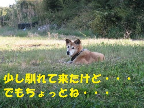 IMG_3262_convert_20210425143012.jpg