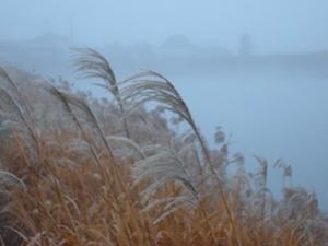 寒々しい風景