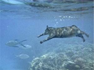 泳ぐ猫スナドリネコ