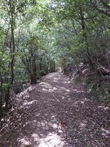 紫雲原生林その2