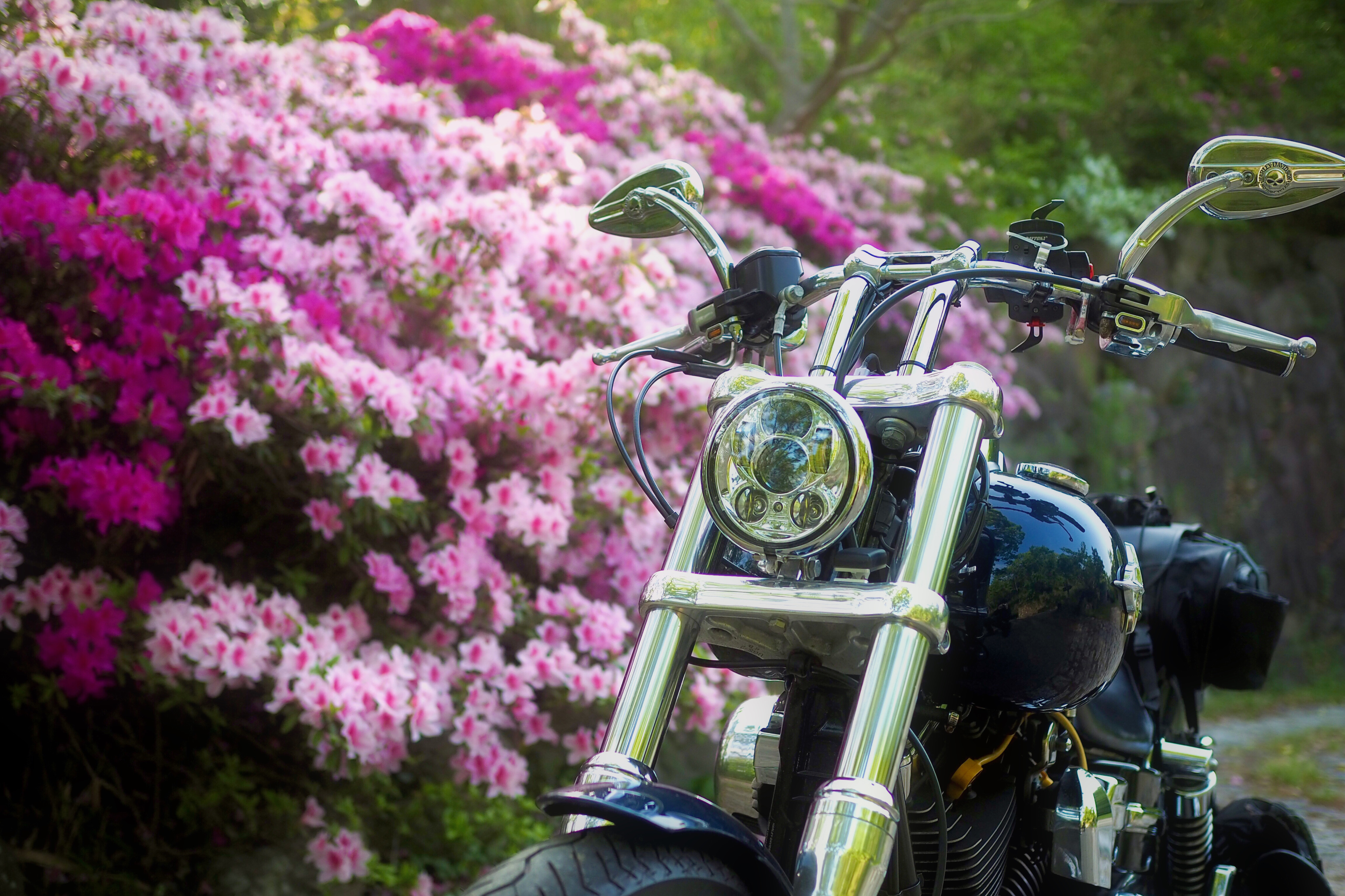 小豆島 絶景&グルメツーリング 高見山公園展望台 ハイキングコース 山道 ツツジ