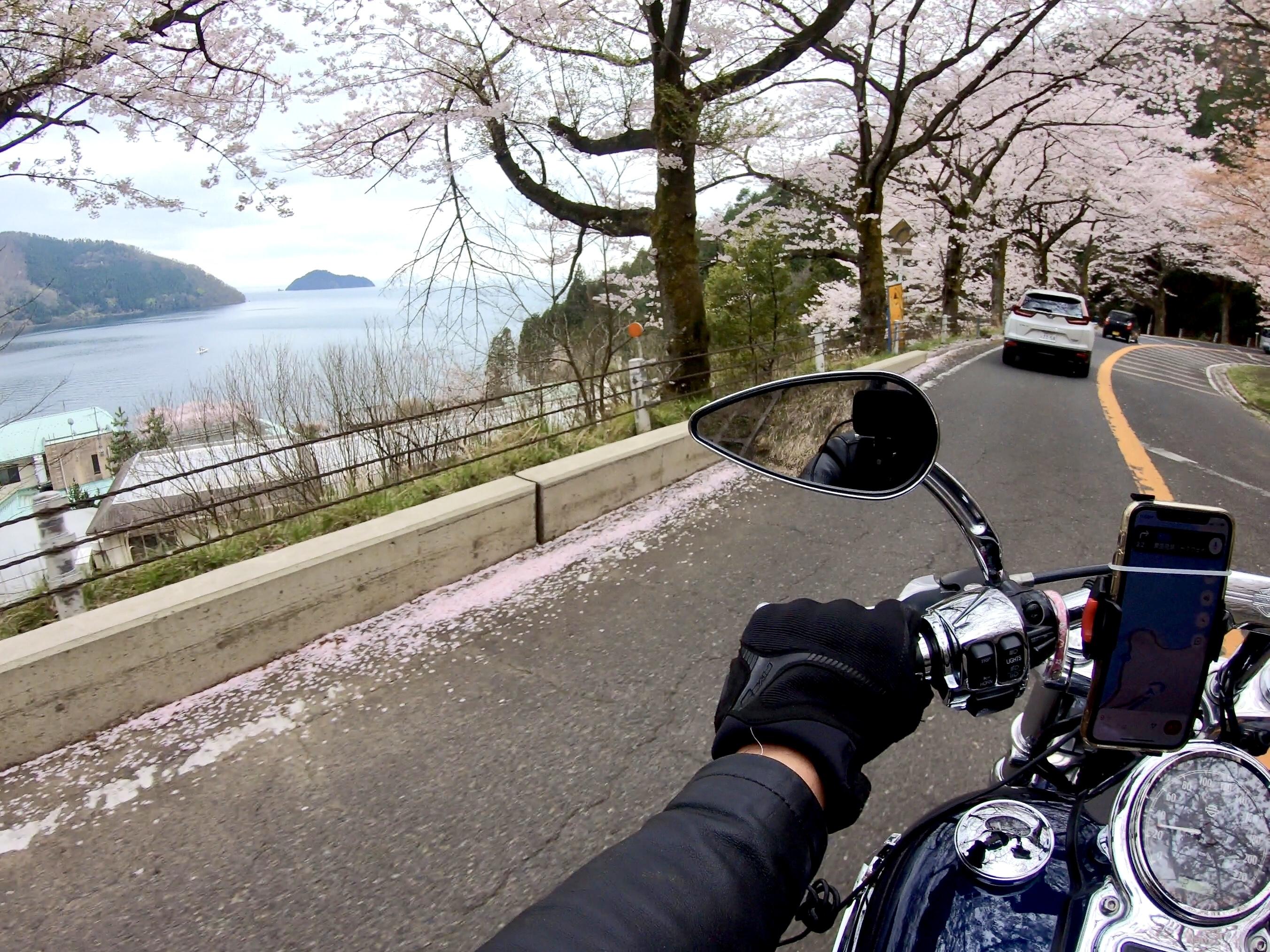 ぴーきち ハーレー 琵琶湖 桜 奥琵琶湖パークウェイ 桜並木 春 琵琶湖の景色