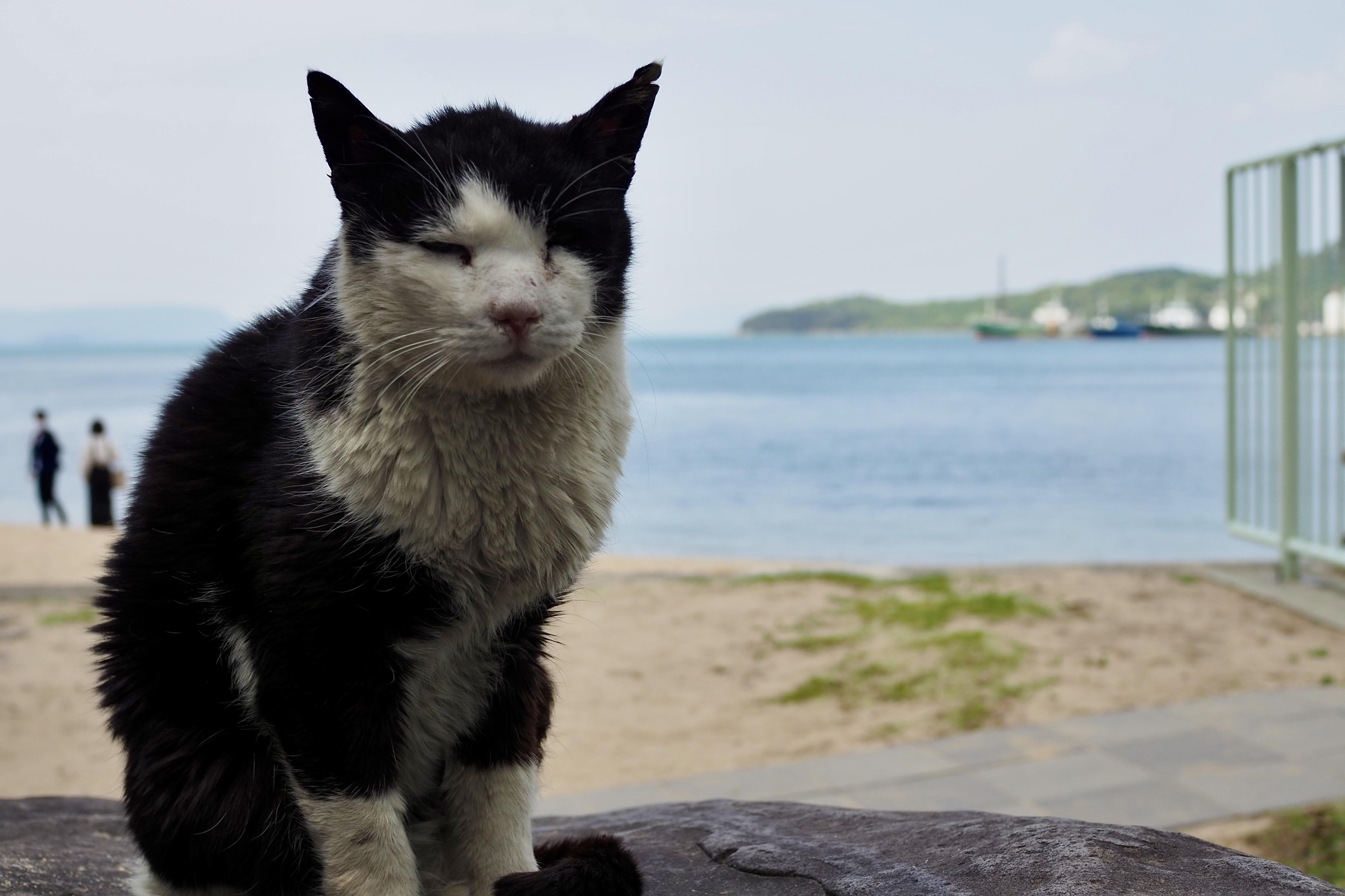 小豆島ツーリング 絶景とグルメ ハーレー 旅 一人旅 エンジェルロード 猫 ニャンコ ぬこ