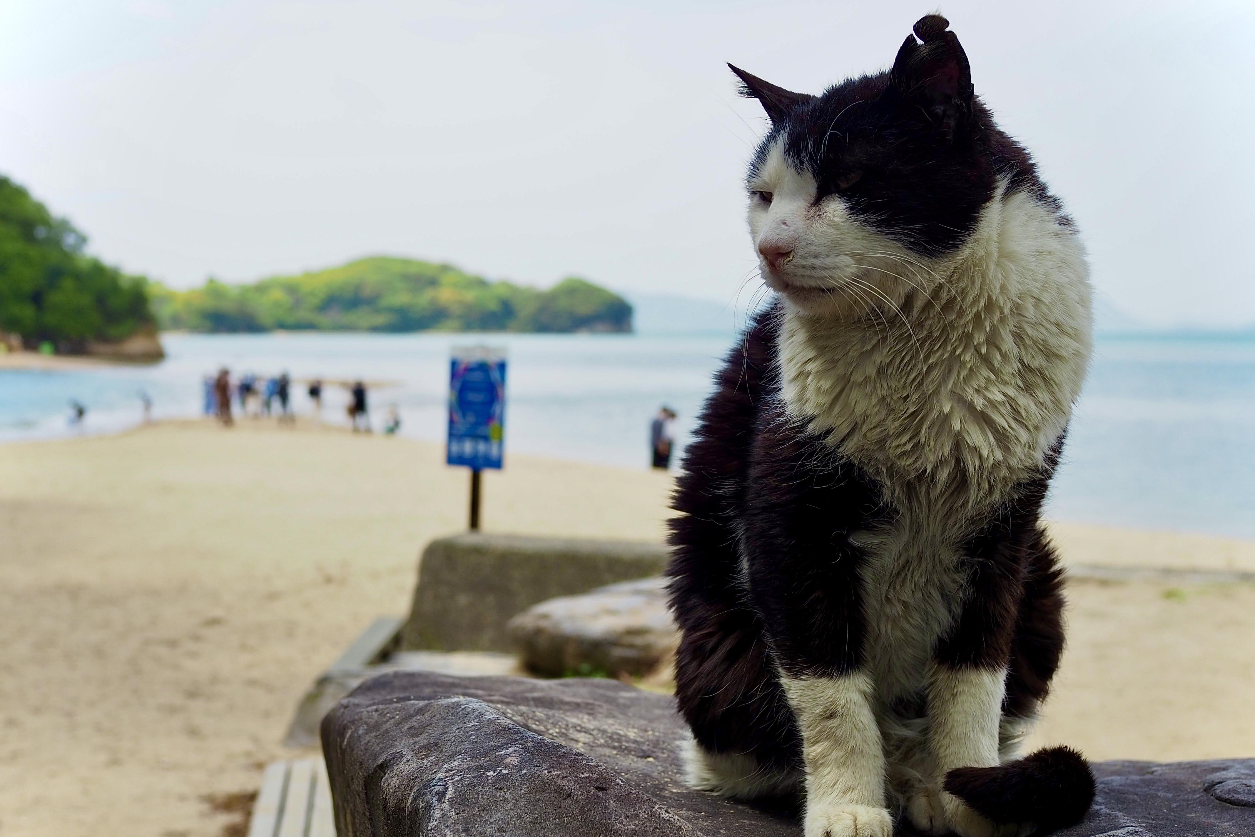 小豆島ツーリング 絶景とグルメ ハーレー 旅 一人旅 エンジェルロード 猫 ニャンコ ぬこ タエちゃん