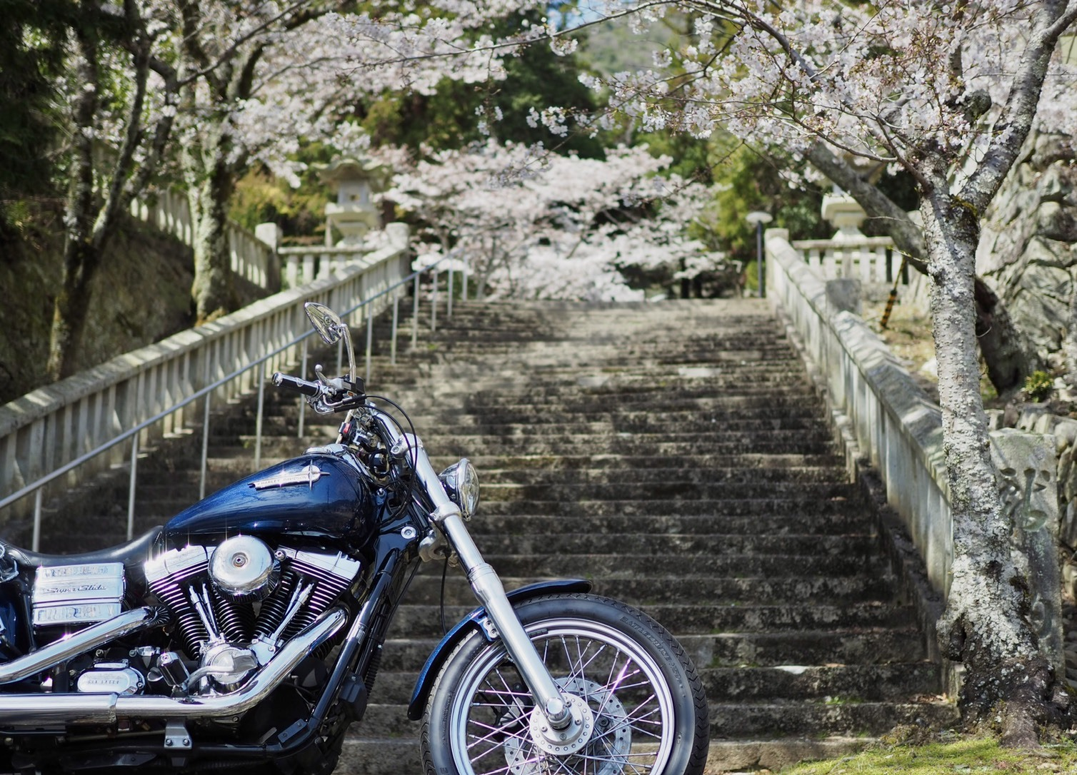 たつの薄口醤油ツーリング 龍野神社 文学の小径 桜 春 播磨の小京都