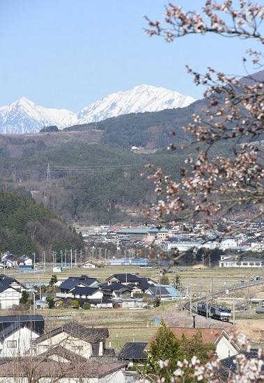 2021年4月10日撮影 篠ノ井線8087レ 桜とアルプス その3