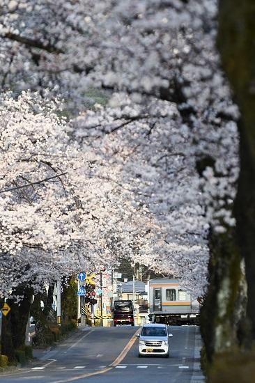 2021年4月2日撮影 飯田線は宮木の桜並木 202M 213系5000番台