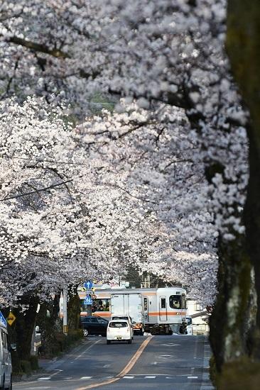 2021年4月2日撮影 飯田線は宮木の桜並木 1403M 313系