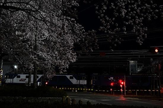 2021年4月3日撮影 南松本にて桜と絡めて EF64 JRFマークとJRマーク
