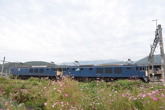 2020年10月3日撮影 篠ノ井線8467レ 聖高原駅にてEF64原色重連と秋桜