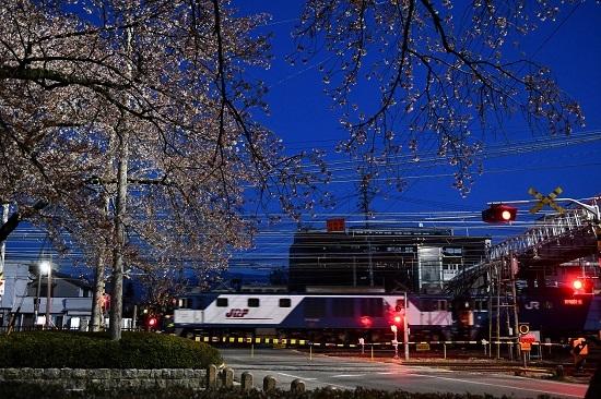 2021年4月10日撮影 早朝の南松本にて桜と西線貨物6089レ EF64-1003号機