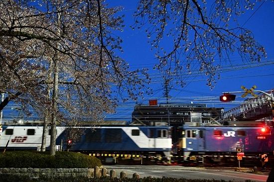 2021年4月10日撮影 早朝の南松本にて桜とJRとJRFのマークを取り込んで