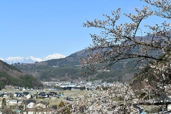 2021年4月10日撮影 篠ノ井線8087レ 桜とアルプス その4
