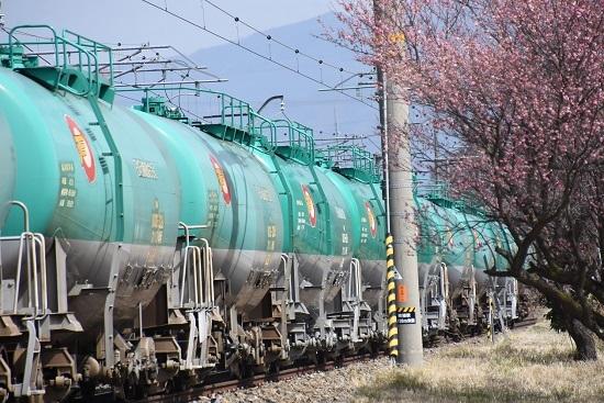 2021年3月20日撮影 西線貨物8084レ 紅梅と緑タキ