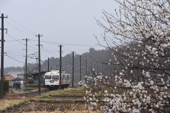 2021年3月28日撮影 アルピコ交通300系 松本山雅「新・心・進」 オリジナルHM 梅の木と
