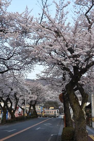 2021年4月2日撮影 飯田線は宮木の桜並木 2201M 213系