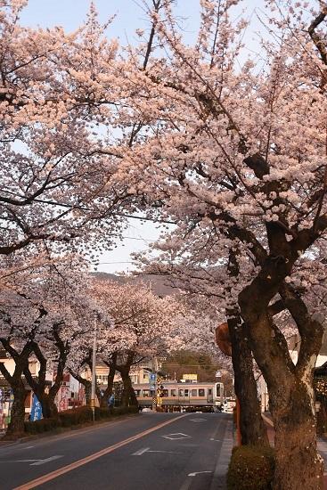 2021年4月2日撮影 飯田線は宮木の桜並木 回送 213系