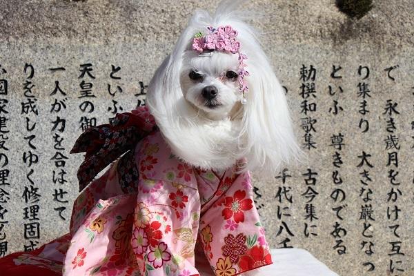 2021.01.18 初詣(出雲神社)-5