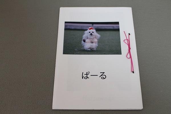 2021.02.17 ぱーるの写真集-2