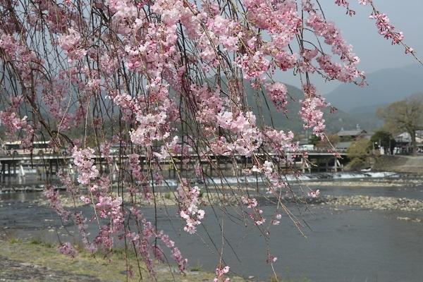 2021.04.10 京都の桜①(嵐山)-7
