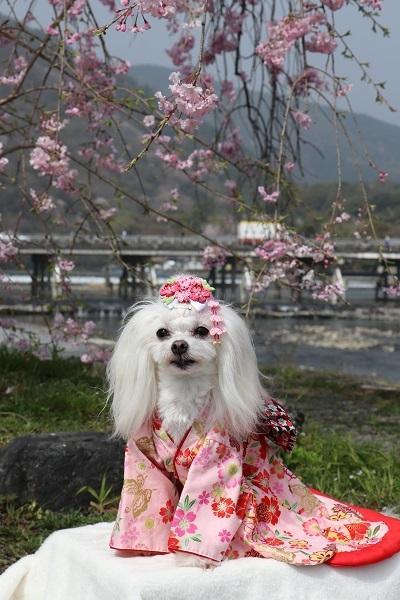 2021.04.10 京都の桜①(嵐山)-8
